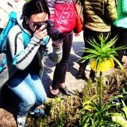 Цветочная достопримечательность Стокгольма - лилия