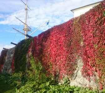 Красота осени в Стокгольме