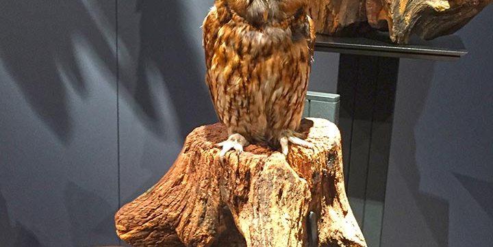 stuffed owl free stock image