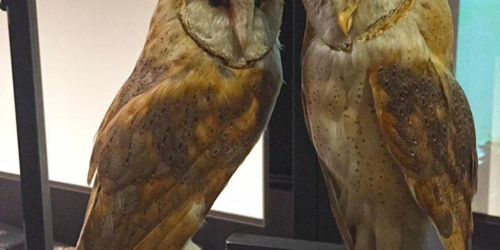 stuffed owls free stock image