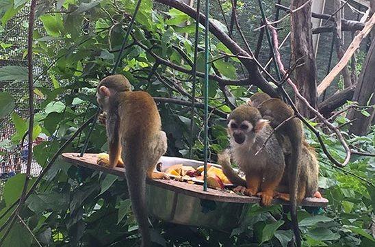 monkeys free stock image