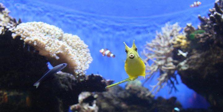 free stock image of exotic fish
