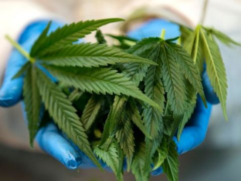 Pot Producer Green Thumb Reports Strong Earnings