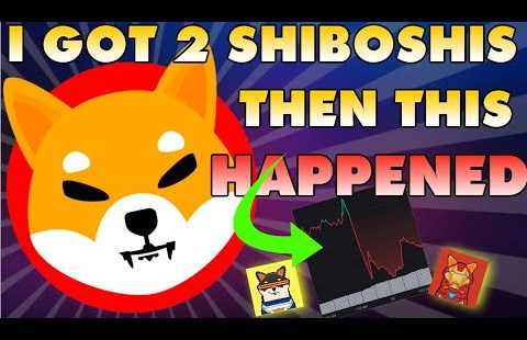 I Obtained 2 SHIBOSHIS & Then THIS Came about…   Shiba Inu NFT's Revenue 567%