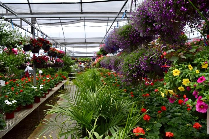 home - stockslagers greenhouse garden center