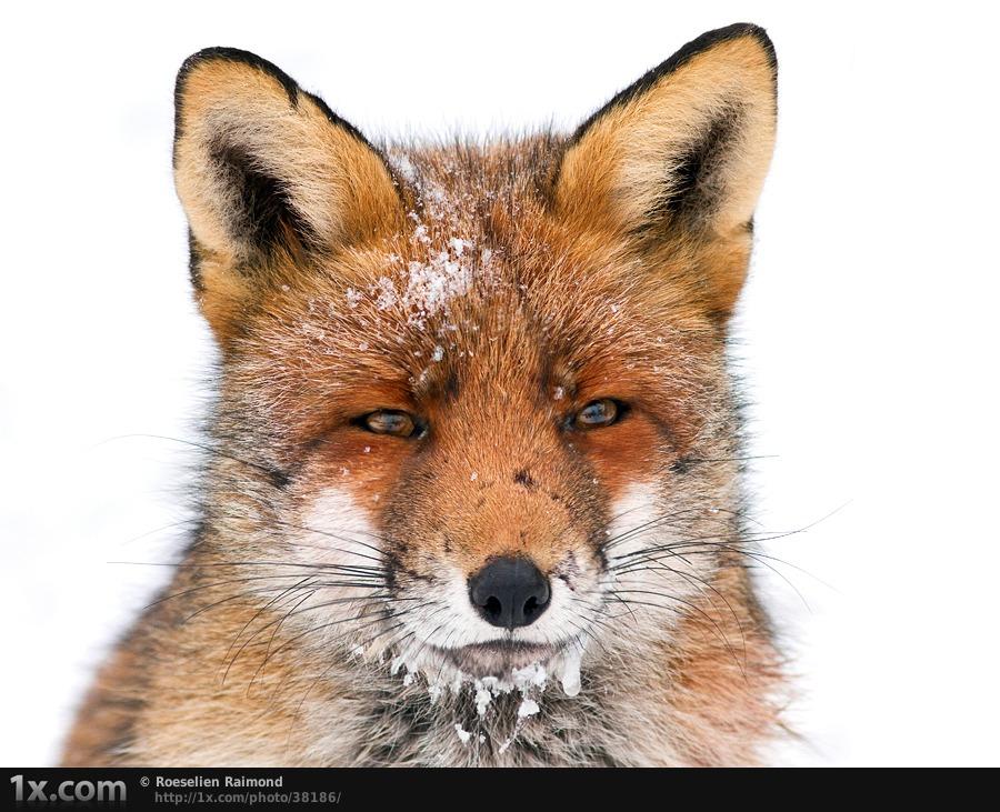 30 Captivating Wild Animal Photographs  Stockvaultnet Blog
