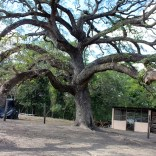 Diany's tree