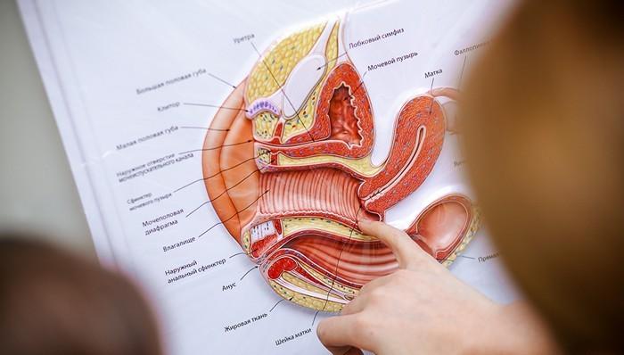 erekcijos stimuliacijos taškai