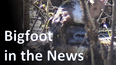 Photo of Sdfiles #027 – Bigfoot in the News