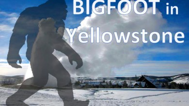 Photo of Sdfiles #31 – Bigfoot in Yellowstone
