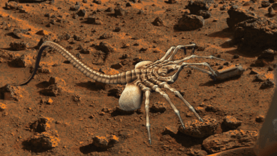 Photo of Sdfiles #52 – Mars Facehugger