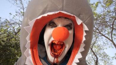 Photo of Clown Shark – #246