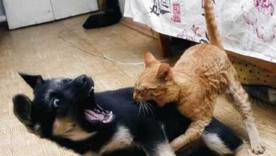 Photo of Kitty Flesh Wound – #306