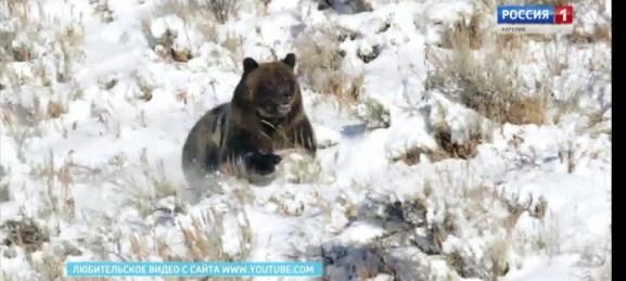 ГЛАВНЫЕ НОВОСТИ НЕДЕЛИ: Полтора миллиарда на дороги, очень злые медведи и тепло, которое уже не за горами