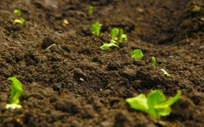 How to Increase the Fertility of Soil