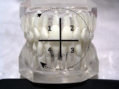 Системы нумерации зубов ISO (FDI), квадранты