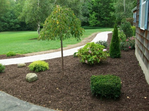 landscaping with dark brown mulch