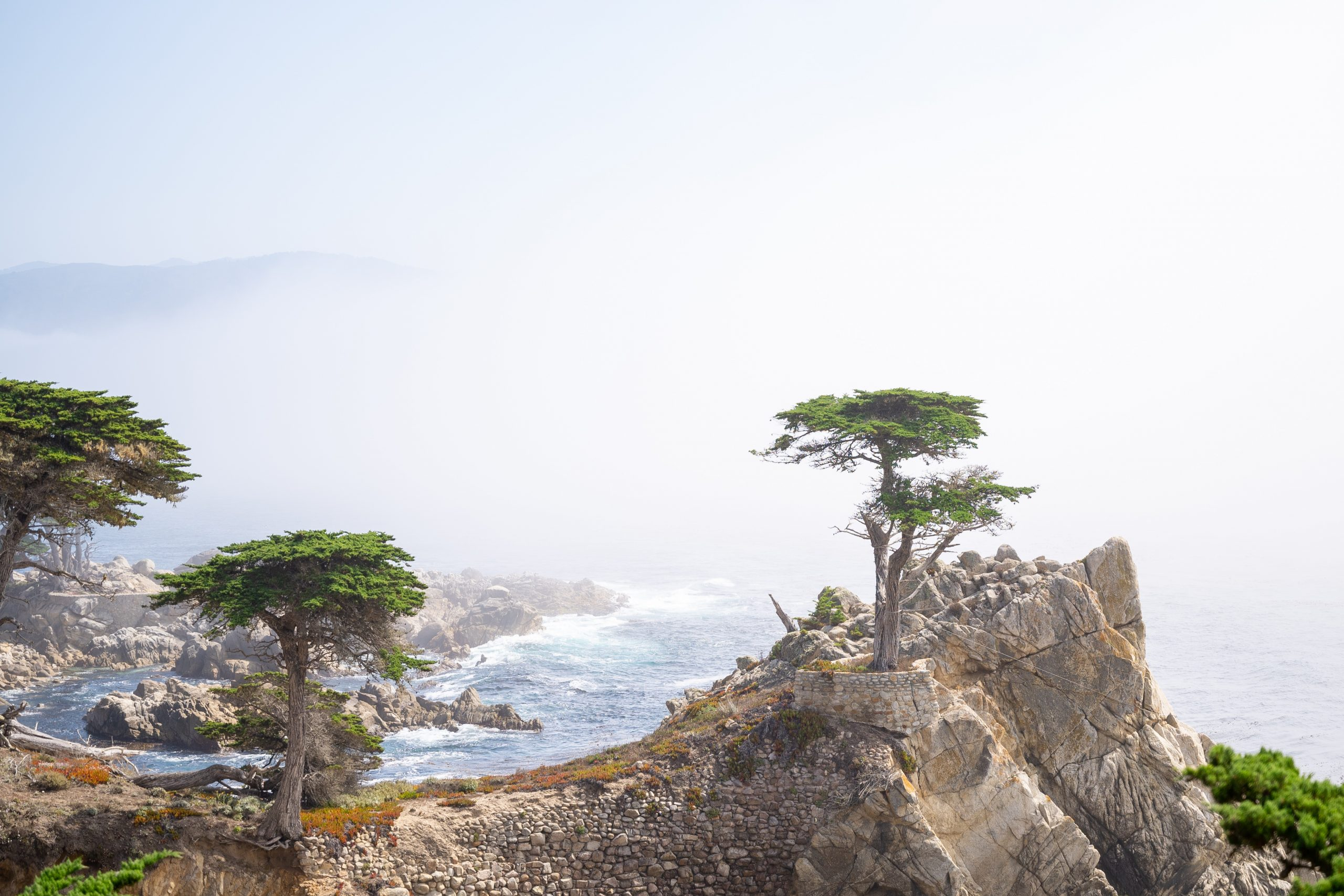 The Lone Cypress, Monterey CA