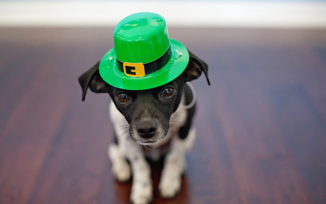 St. Patrick's Day Festivities Around The Bay Area