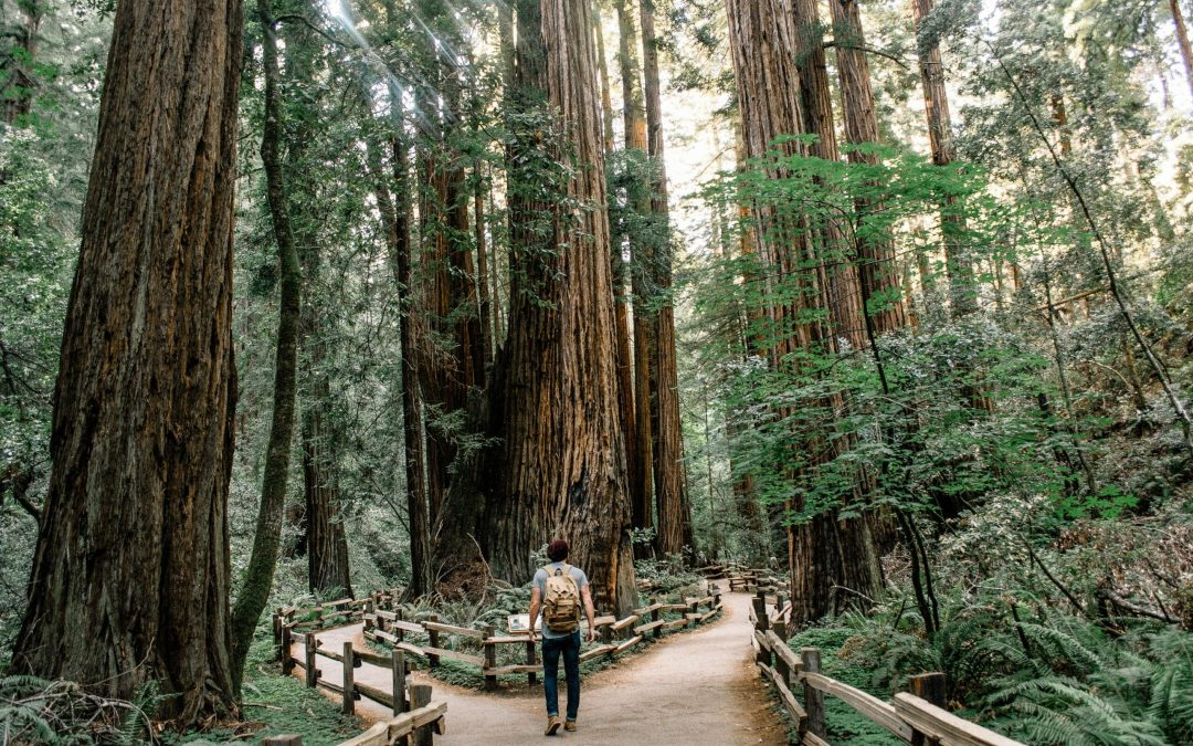 Bay Area Hikes To Do List