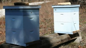 Winter Hive Setup 2016