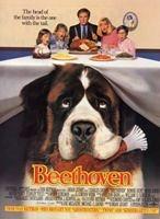 看過的狗狗相關的電影大薈萃 | 銀藍色的蜥蜴