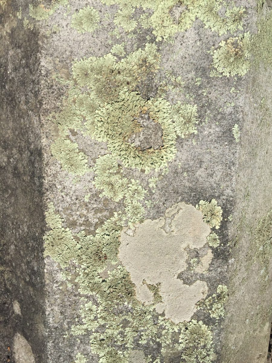 Lichen and Patina on Granite