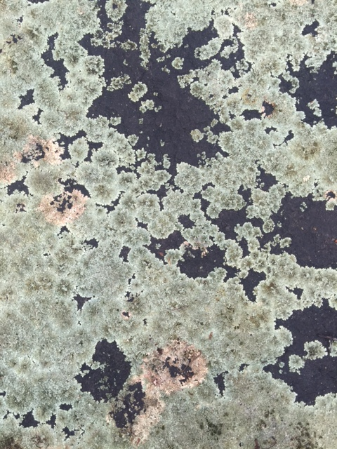 Weathered Granite with Lichen