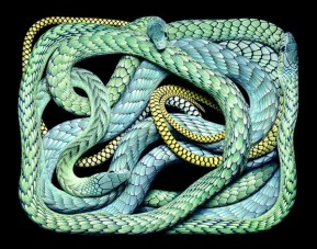 Coiled Snakes Representing Eternity
