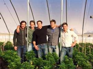 stanley brothers weed