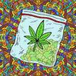 smoking cannabis while tripping on acid