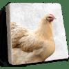 Chicken Marble Coaster