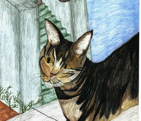 Comet Is Missing cat walking