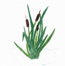 The Garden green plant