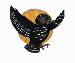 Curandero black owl