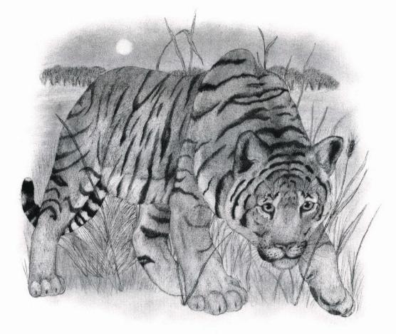 Ttger Prey tiger on the hunt