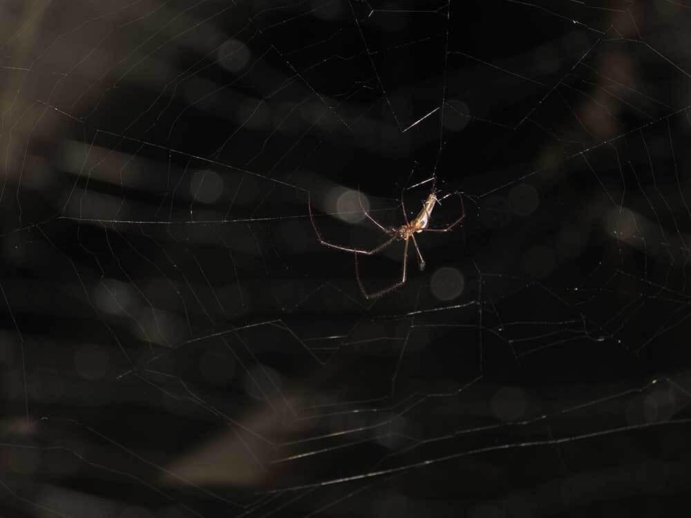 Web Dweller