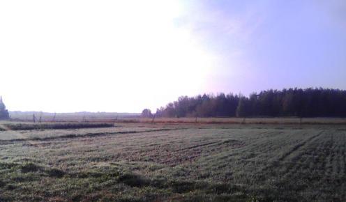 Winter Rye Like Lawn