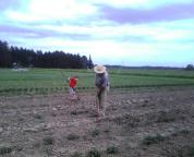 Craig and Franklin hoeing spuds