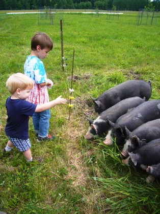 Throwing nuts to the pigs