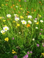 Wildflower close-up