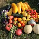 Quick Look: Storer's Outdoor Environmental Education Program