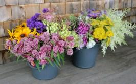 Dan's Flower Farm