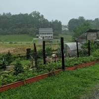 Franny's Farm