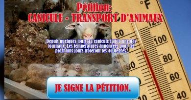 Demandez l'arrêt du transport des animaux