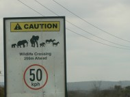 A bit more exciting than the deer crossing signs we are used to in Iowa!