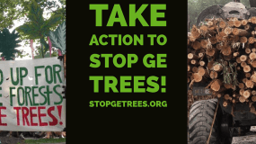 Take Action! Help End the Threat of Genetically Engineered Trees