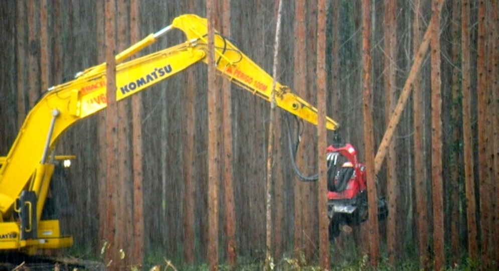 Scientists warn: Burning trees for electricity = more logging, more CO2