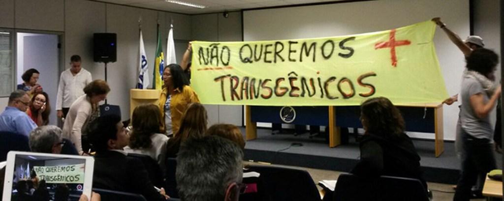 Brazil govt approves GMO eucalyptus trees: Groups denounce illegal decision