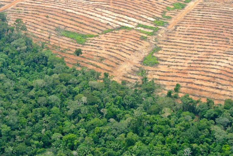 """""""We are going to kill you"""": Indigenous activist's life in danger after opposing destruction of Peruvian Amazon by oil palm companies"""